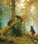 Государственная Дума устранит несправедливые ограничения по пользованию лесными ресурсами для населения